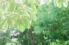 特写镜头被弄脏的绿色叶子背景 免版税库存照片
