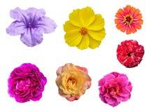 特写镜头被隔绝的小组美丽的花 库存照片
