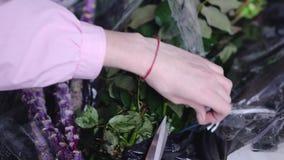 特写镜头观点的卖花人在工作:妇女切开在花店的被包装的玫瑰 股票录像