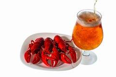特写镜头观点的在白色板材和杯的煮熟的小龙虾在白色背景的啤酒与裁减路线 免版税库存图片