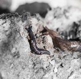 特写镜头轻的自然本质照片蜗牛 宏指令 库存照片