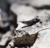 特写镜头轻的自然本质照片蜗牛 宏指令 图库摄影