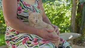 特写镜头轻轻地宠爱红色猫的国家妇女在阴影坐长凳 股票视频