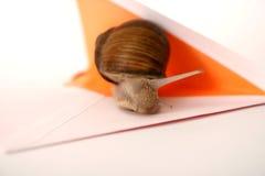 特写镜头邮件蜗牛 图库摄影