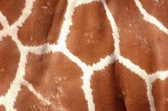 特写镜头长颈鹿皮肤 库存图片