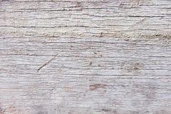 特写镜头难看的东西背景的森林纹理 图库摄影