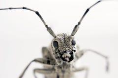 特写镜头顶头昆虫 库存照片