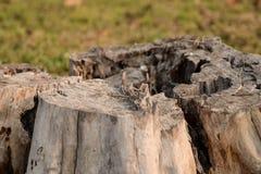 特写镜头顶视图被射击中心老树桩 可看见的线和的样式 免版税库存照片