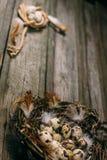 特写镜头鸟在一条边和绳索的巢用鹌鹑蛋和羽毛盘绕用在其他的鸡蛋在土气木背景 免版税库存图片