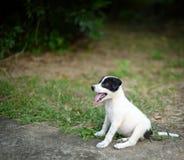 特写镜头黑白狗坐地面 库存照片