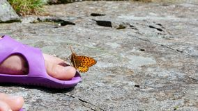 特写镜头,一只美丽的橙色山蝴蝶旋转并且飞行在凉鞋的儿童` s腿 蝴蝶坐 股票视频