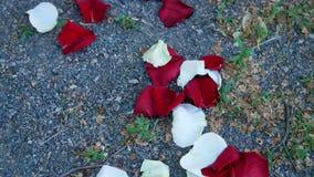 特写镜头,在地面上,小石渣,疏散玫瑰花瓣,白色,红色 影视素材