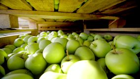 特写镜头,木容器,箱子,在上面被填装的篮子用大绿色美味苹果在水果加工 影视素材