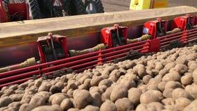 特写镜头,机械化的机器potatoe种植的过程 有特别设备和土豆种子的,乘驾大拖拉机 股票录像