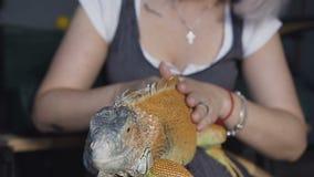 特写镜头 aptive爬行动物-使说谎在她的腿兴奋的澳大利亚有胡子的龙宠物蜥蜴 影视素材