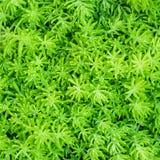 特写镜头Beautyful蕨叶子绿色叶片顶视图背景  免版税库存照片