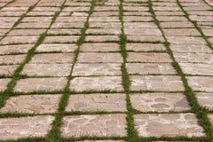 特写镜头与一棵发芽的草的铺路板样式 库存图片