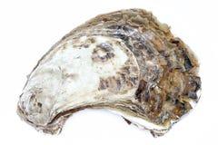 特写镜头整个新鲜的牡蛎壳纹理在白色背景的 免版税图库摄影