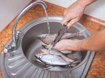 特写镜头厨师的手洗涤鱼 免版税图库摄影