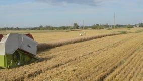 特写镜头组合收获麦子农业领域鹳 股票录像