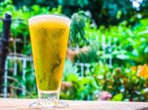 特写镜头在庭院背景的啤酒草 免版税库存图片