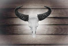特写镜头在木墙壁上的头骨母牛 免版税库存图片