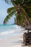 特写镜头在风的可可椰子树在白色 库存图片