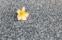特写镜头在黑大理石石地板纹理背景的下落的黄色花 库存照片
