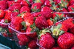 特写镜头水多,新鲜,生态上被生产的,红色草莓 库存照片