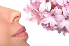 特写镜头鼻子和花 对花的花粉的过敏 小行星 图库摄影