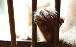 特写镜头猴子` s手 库存图片
