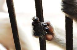 特写镜头猴子` s手 免版税库存图片