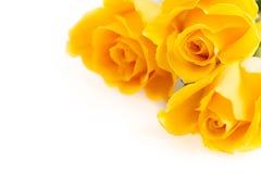 三朵黄色玫瑰 免版税库存照片
