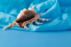 特写镜头射击了放置在蓝色丝绸的黄海壳 库存照片