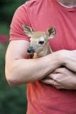特写镜头小鹿一点 免版税库存照片