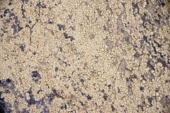 特写镜头干燥破裂的地球背景,黏土在大鹏的沙漠纹理 免版税库存图片