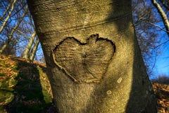 特写镜头心脏形状 库存照片