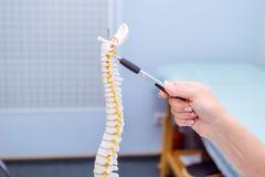 特写镜头指向在子宫颈脊椎模型的医生妇女 是概念现有量有医疗保健帮助延迟药片 选择聚焦 图库摄影