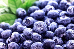 特写镜头新鲜的摘的蓝莓 库存照片