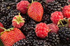 特写镜头新鲜的黑莓、莓和草莓 免版税库存图片