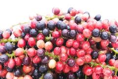 特写镜头新Mak毛或泰国蓝莓,在northeas的地方果子 免版税库存照片