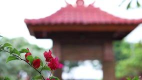 特写镜头明亮的红色花在户外亚洲公园 巴厘岛印度尼西亚 在背景的巴厘语大厦 股票视频