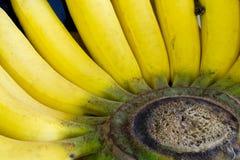 特写镜头核心成熟黄色香蕉 库存照片
