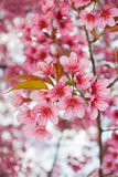 特写镜头桃红色花卉 免版税库存图片