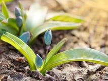 特写镜头植物从地面增长 浅深度的域 日落 库存照片