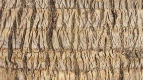 特写镜头椰子树sureface纹理 免版税库存图片