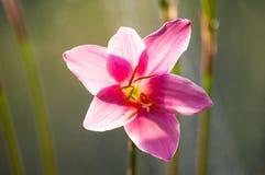 特写镜头深度花小粉红色的锋利 图库摄影
