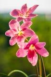 特写镜头深度花小粉红色的锋利 免版税图库摄影