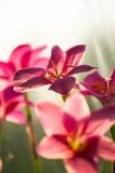 特写镜头深度花小粉红色的锋利 库存图片