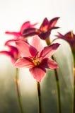 特写镜头深度花小粉红色的锋利 免版税库存图片